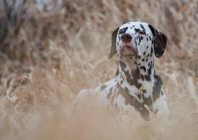Meine Hunde - Tierheilpraxis am Park